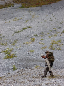 Chris Widrig carrying ram & 100 pound pack off mountain, August 2012